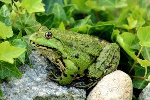 co je żaba