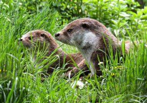 jak się pozbyć wydry